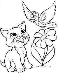 חתולה ציפור ופרח לצביעה